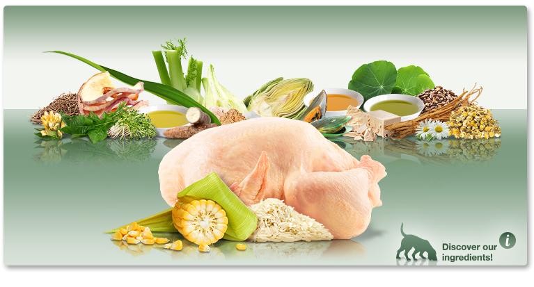 PLATINUM Adult Chicken – STAŁY RABAT W OPISIE PRODUKTU 5zł | 10zł | 15zł