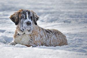 jak dbac o psie lapki zima?